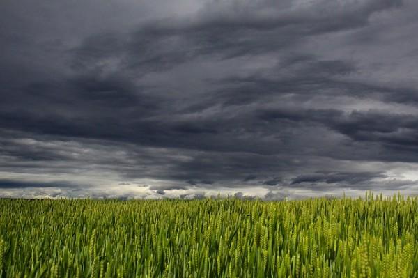 Szykują się kolejne zmiany w ustawie o ubezpieczeniach rolnych