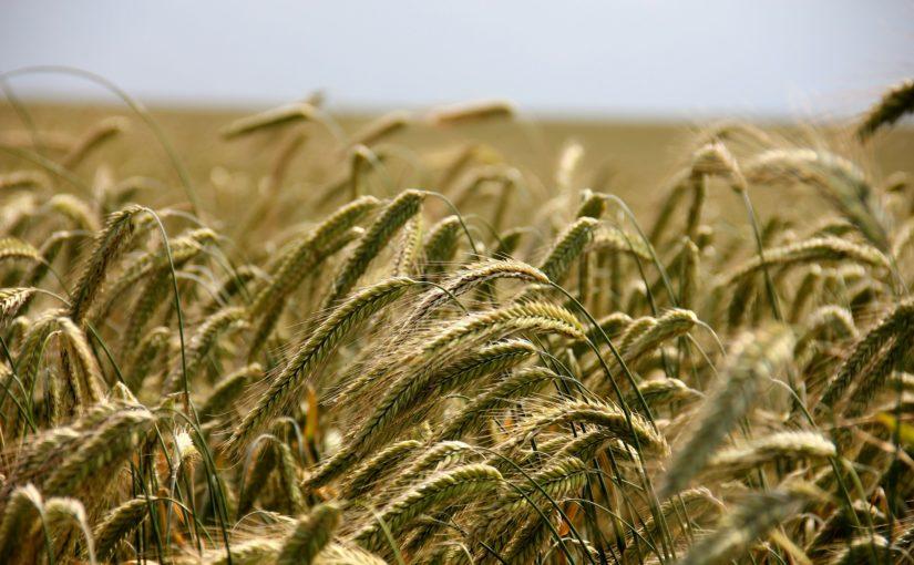 Stan ubezpieczeń rolnych jest niezadawalający