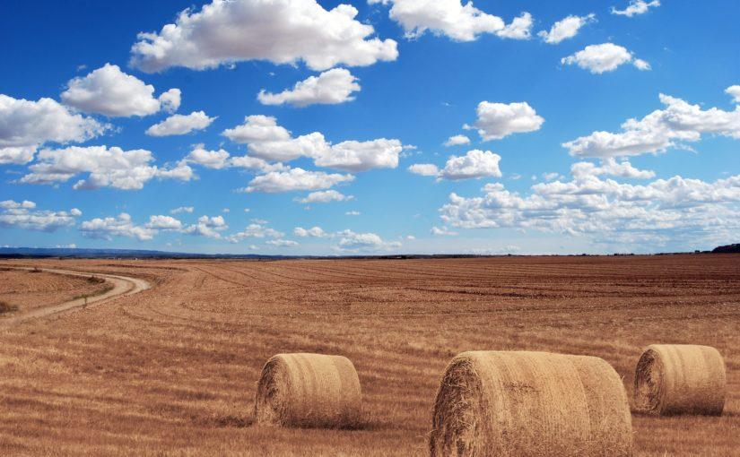 PZU rozpoczyna jesienną kampanię zawierania dotowanych polis rolnych