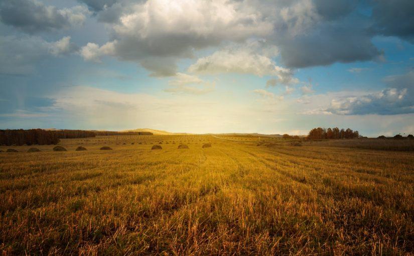 Do połowy listopada jest czas na ubezpieczenie upraw