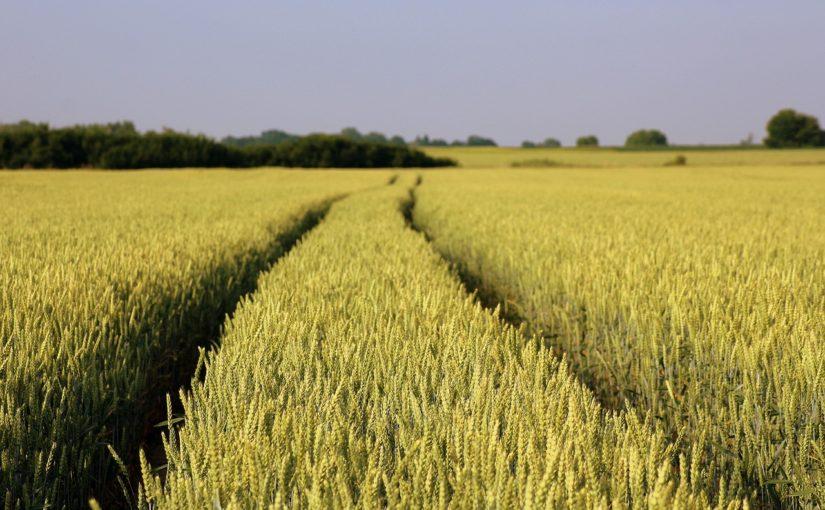 Concordia Ubezpieczenia: Ruszają ubezpieczenia dla rolników